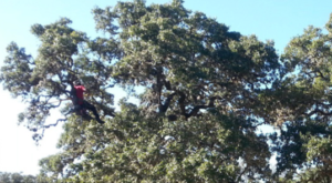 Tree trimming san antonio
